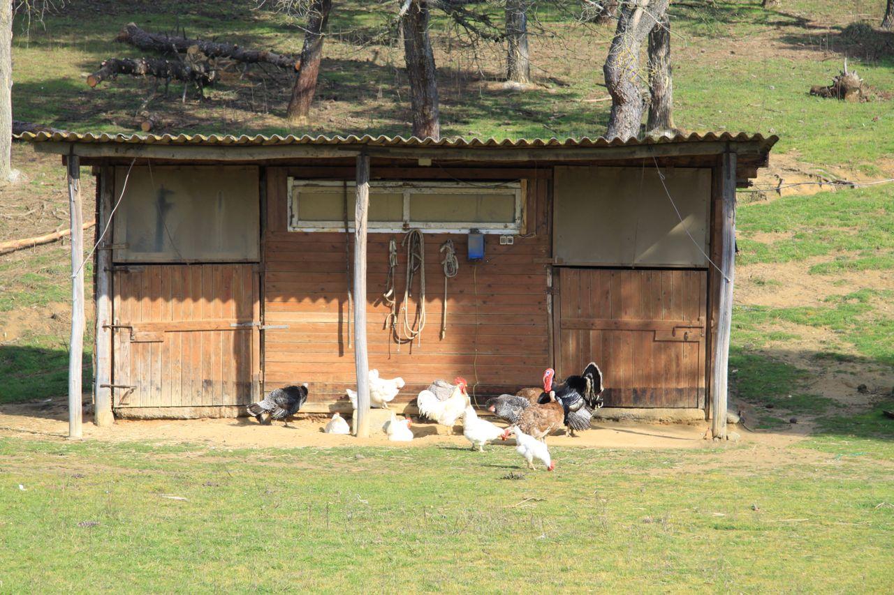 Un pollaio in cortile per mangiare sempre sano beauty blog for Cortile della campagna francese